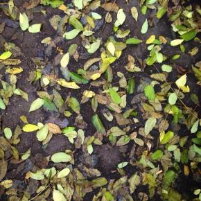Autumn leaves, renewal.