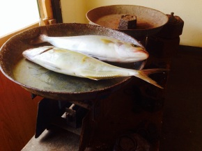 The fishmonger's balance scales