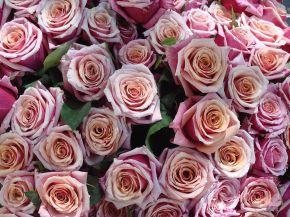 Naming Roses