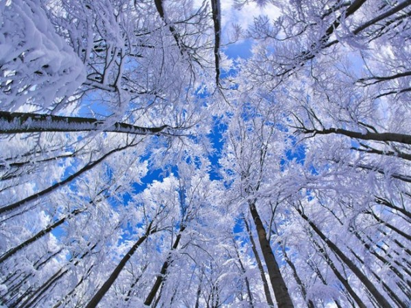 Beech Forest, Germany  Photograph: http://thegrid.soup.io/